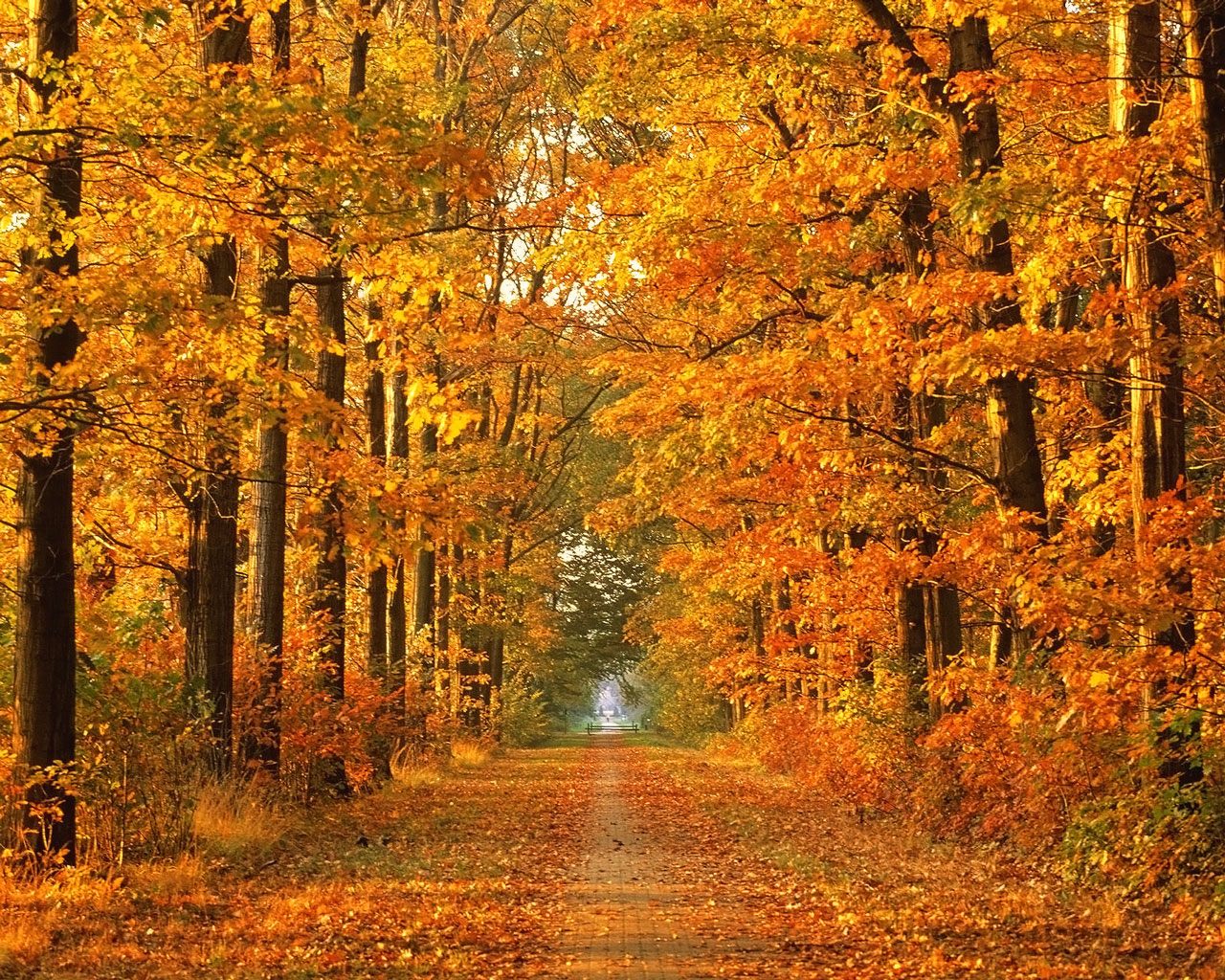 """an introduction to the nature and the time of autumn But regardless of which camp they fall into watch as nature shares the stories of pet owners and photos for """"introduction"""" and how to enter by joe."""