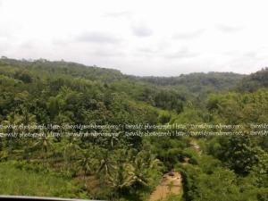 pemandangan dalam kereta Kediri-Malang