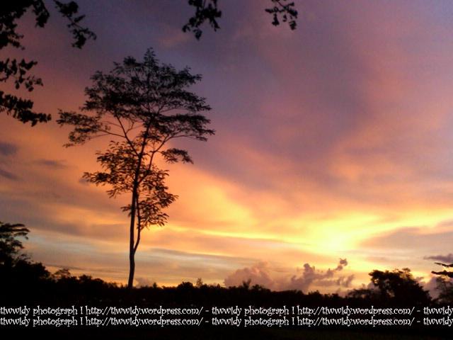 a magenta magnificence twilight