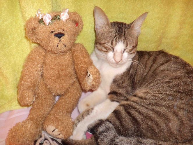 my teddy bear and lovely cat