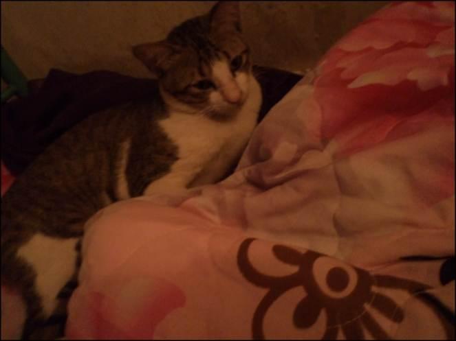 My cute cat Nyinmi