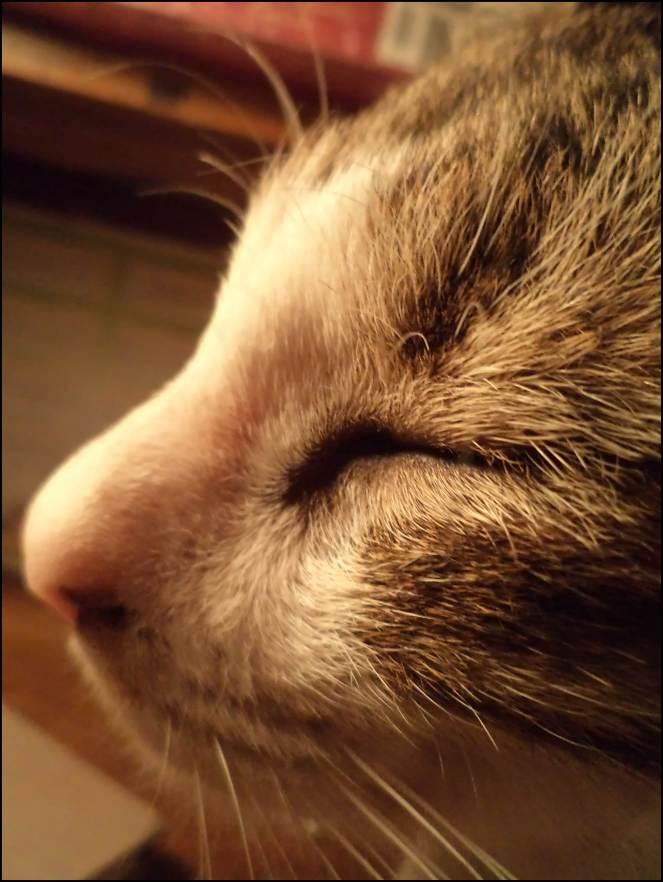 Nyinmi, my Cat