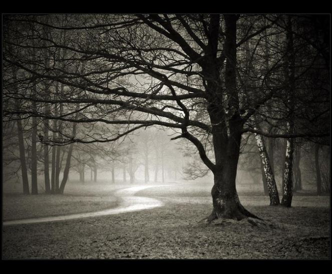 Winter trees without leaves (Google)