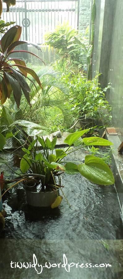 Hujan - Rain