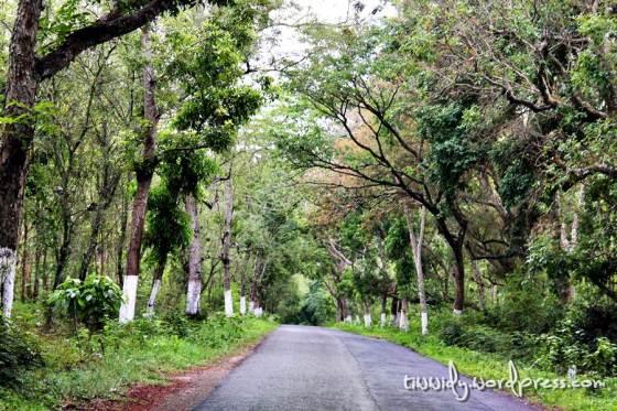 Jalanan Taman Nasional Alas Purwo, Banyuwangi