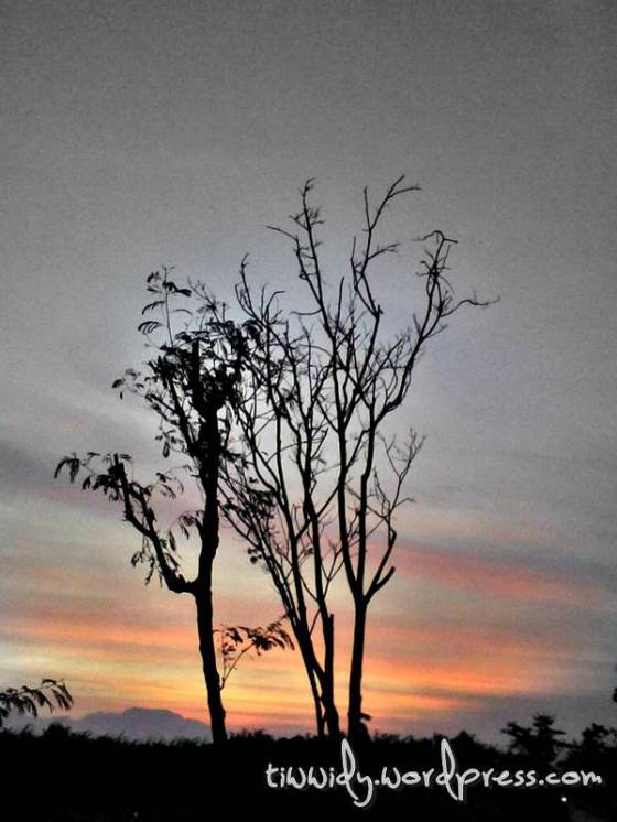 Dawn - Leafless tree - tiwwidy.wordpress.com