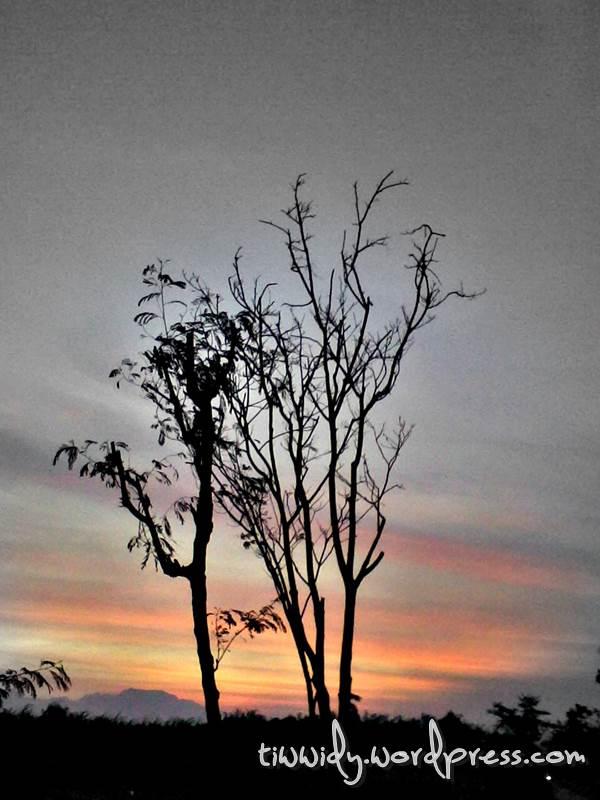 Dawn - Leafless tree - tiwwidy.wordpress.com
